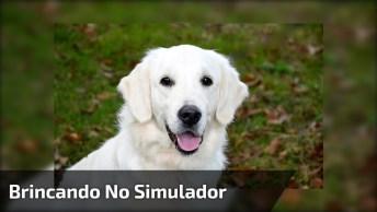 Cachorro Balançando Em Simulador De Caminhadas, Olha Só A Carinha De Felicidade!