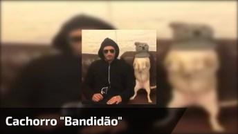 Cachorro 'Bandidão' - Ele Só Quer Furtar Ração Gente, Hahaha!