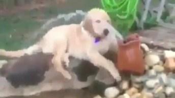 Cachorro Bebendo Água Na Bica, Que Diversão Para Ele, Confira!