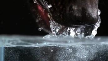 Cachorro Bebendo Água, Veja Como É Incrível Ver Como Funciona Esta Ferramenta!