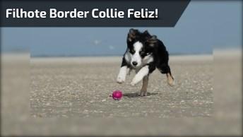 Cachorro Border Collie Correndo, Ele Ainda É Um Filhotinho!
