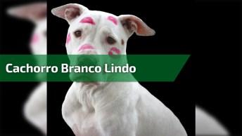 Cachorro Branco Lindo, Quem Gostaria De Ter Um Amiguinho Desse?