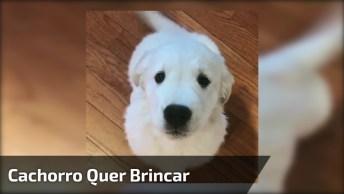 Cachorro Branco Pedindo Alguma Coisa, Ele É Lindo, Confira!