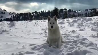 Cachorro Branco Pulando Na Neve - Uma Belíssima Imagem Para Compartilhar!