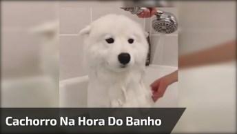 Cachorro Branco Que Se Aprece Com Um Urso Polar, Veja Que Lindo!