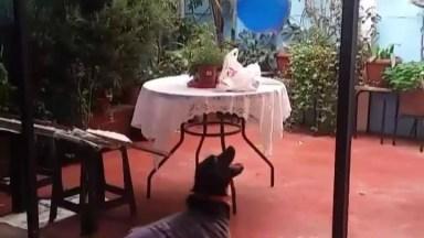 Cachorro Brincando Com Balão, Veja Como Este Amiguinho Gosta Deste Brinquedo!