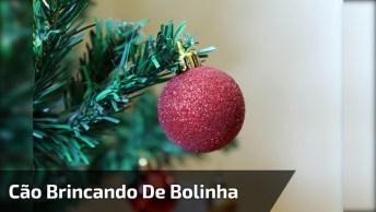 Cachorro Brincando Com Bolinha Da Árvore De Natal, Olha Só Que Fofura!