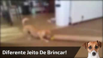 Cachorro Brincando Com Bolinha De Um Jeito Que Você Nunca Viu!