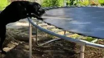 Cachorro Brincando Com Bolinha Na Cama Elástica, Veja Como Ele É Inteligente!