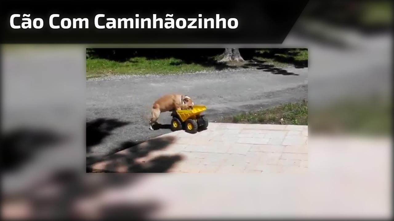 Cão com caminhãozinho