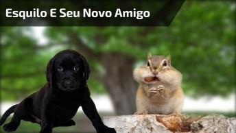 Cachorro Brincando Com Esquilo, Olha Só Como Esquilo Faz Ele De Bobo, Kkk!