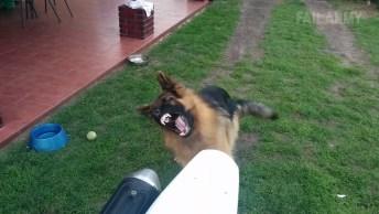 Cachorro Brincando Com O Escapamento De Uma Moto, Igual Criança Com Ventilador!