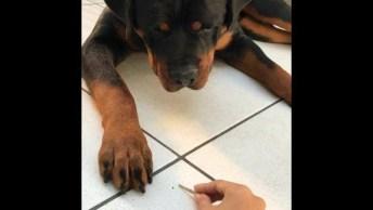 Cachorro Brincando Com Palito, Ele Só Tem Cara De Bravo, Confira!