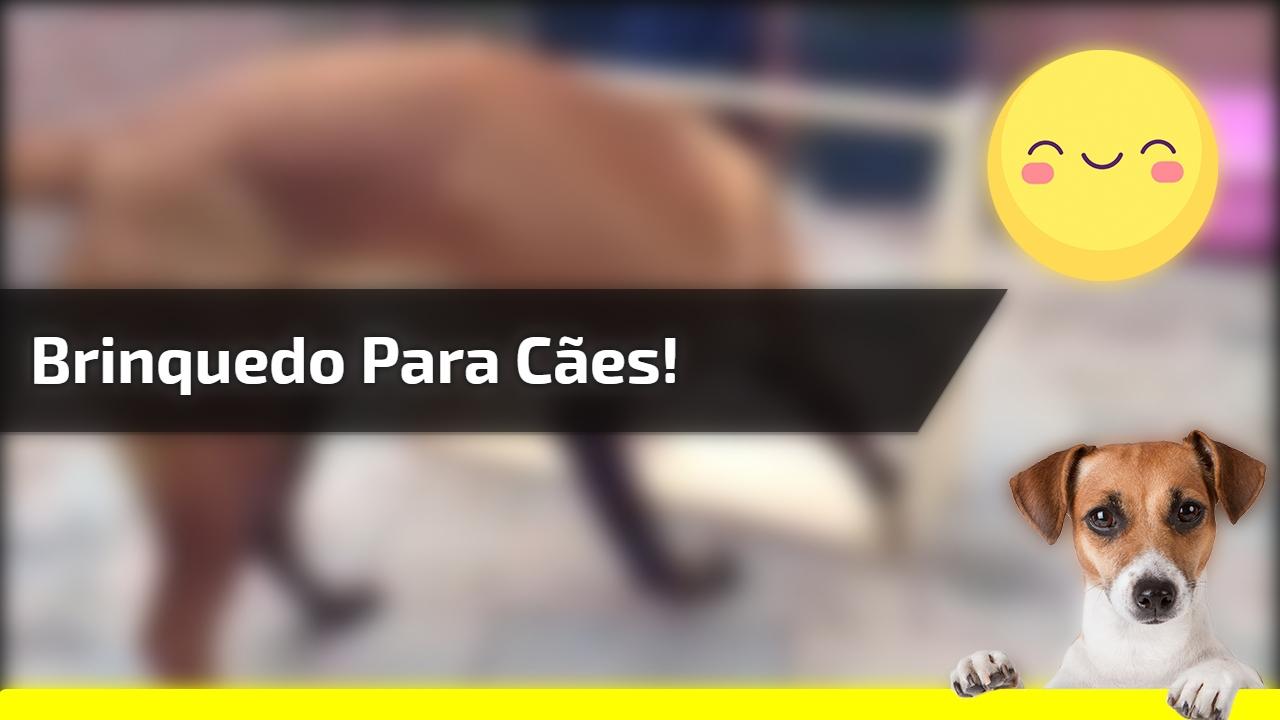 Brinquedo para cães!