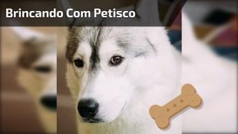 Cachorro Brincando Com Petisco, Olha Só A Festa Que Ele Faz!