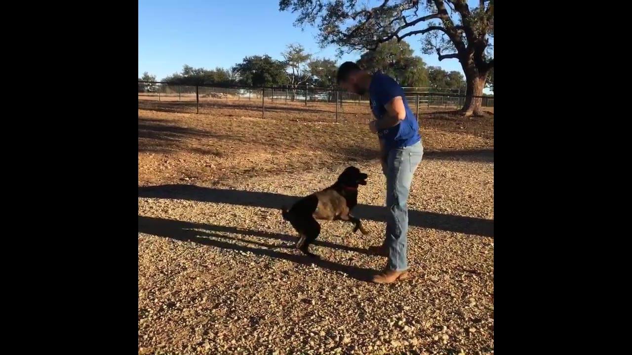 Cachorro brincando com seu dono