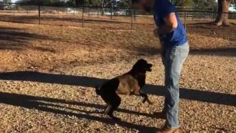 Cachorro Brincando Com Seu Dono, Veja Como Ele É Espertinho!