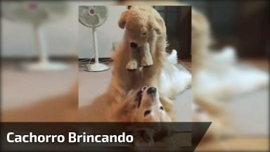 Cachorro Brincando Com Seu Ursinho De Pelúcia, Ele Parece Uma Criancinha!