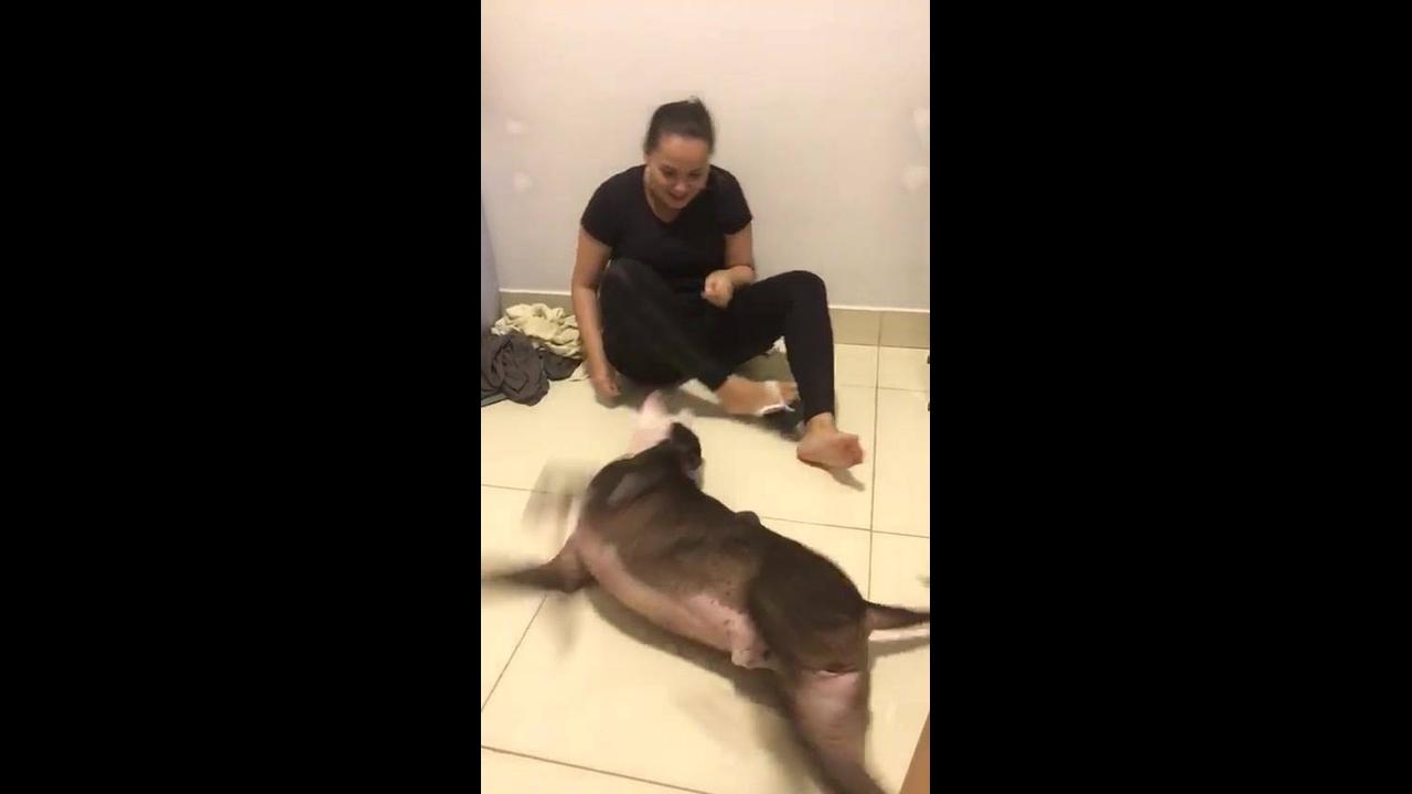 Cachorro brincando com sua mamãe