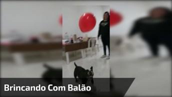 Cachorro Brincando De Bater Balção Com Sua Mamãe, Olha Só Que Lindo!