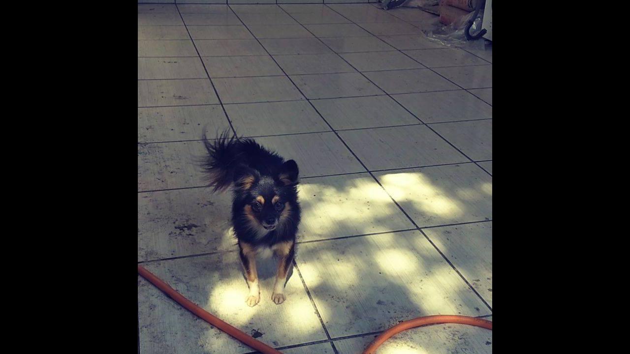 Cachorro brincando de ficar rodando