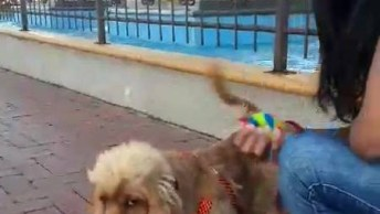 Cachorro Brincando De Pegar A Bolinha Com A Mamãe, Olha Só Que Fofura!