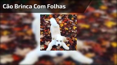 Cachorro Brincando Entre Folhas Secas, Veja A Alegria Deste Amiguinho!