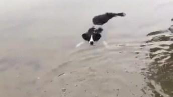 Cachorro Brincando Na Água, Veja Como Gosta De Ficar Na Água!