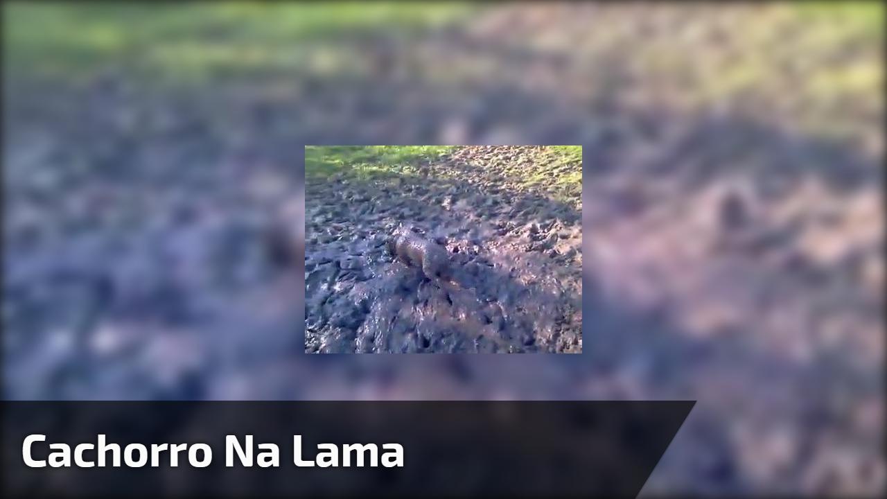 Cachorro na lama