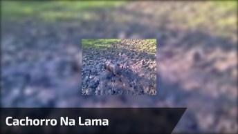 Cachorro Brincando Na Lama, Quase Não Para Vê-Lo De Tão Sujo Que Ele Esta!