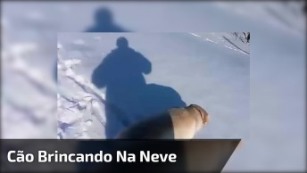 Cachorro Brincando Na Neve, Veja Como Eles Gosta É Muito Engraçadinho!