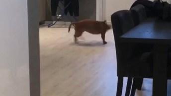 Cachorro Brincando Sozinho, A Felicidade Esta Nas Pequenas Coisas!