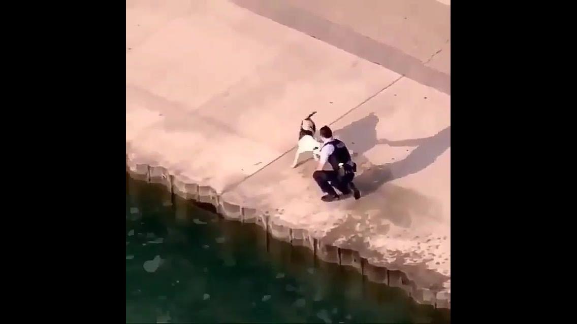Cachorro cai na água sem querer e homem o ajuda