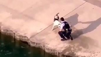 Cachorro Cai Na Água Sem Querer E Homem O Ajuda, Por Mais Seres Humanos Assim!