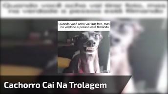 Cachorro Cai Na Trolagem De Filmar Em Vez De Tirar Foto, Confira!