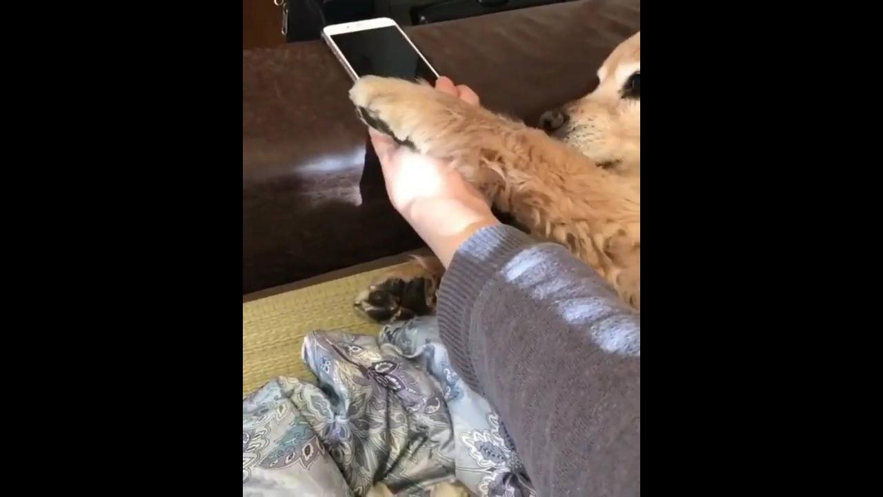 Cachorro cansou de sua dona mexer no celular