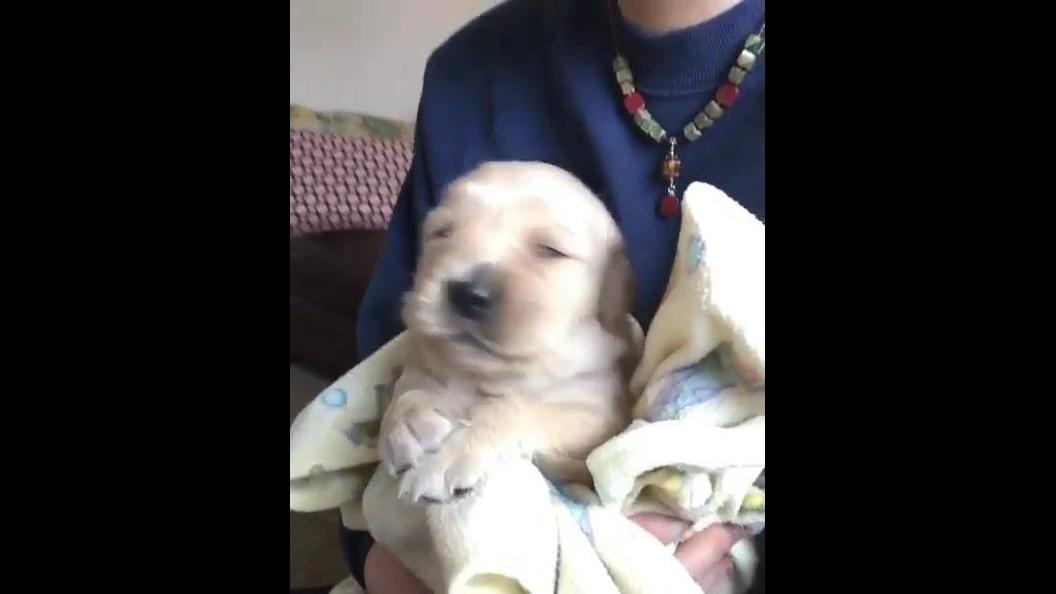 Cachorro canta após tomar banho