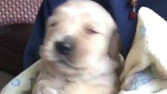 Cachorro Canta Após Tomar Banho, Que Coisa Engraçada Hahaha!
