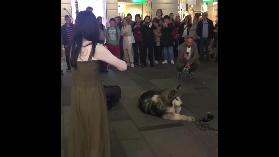 Cachorro canta enquanto sua dona toca no violino