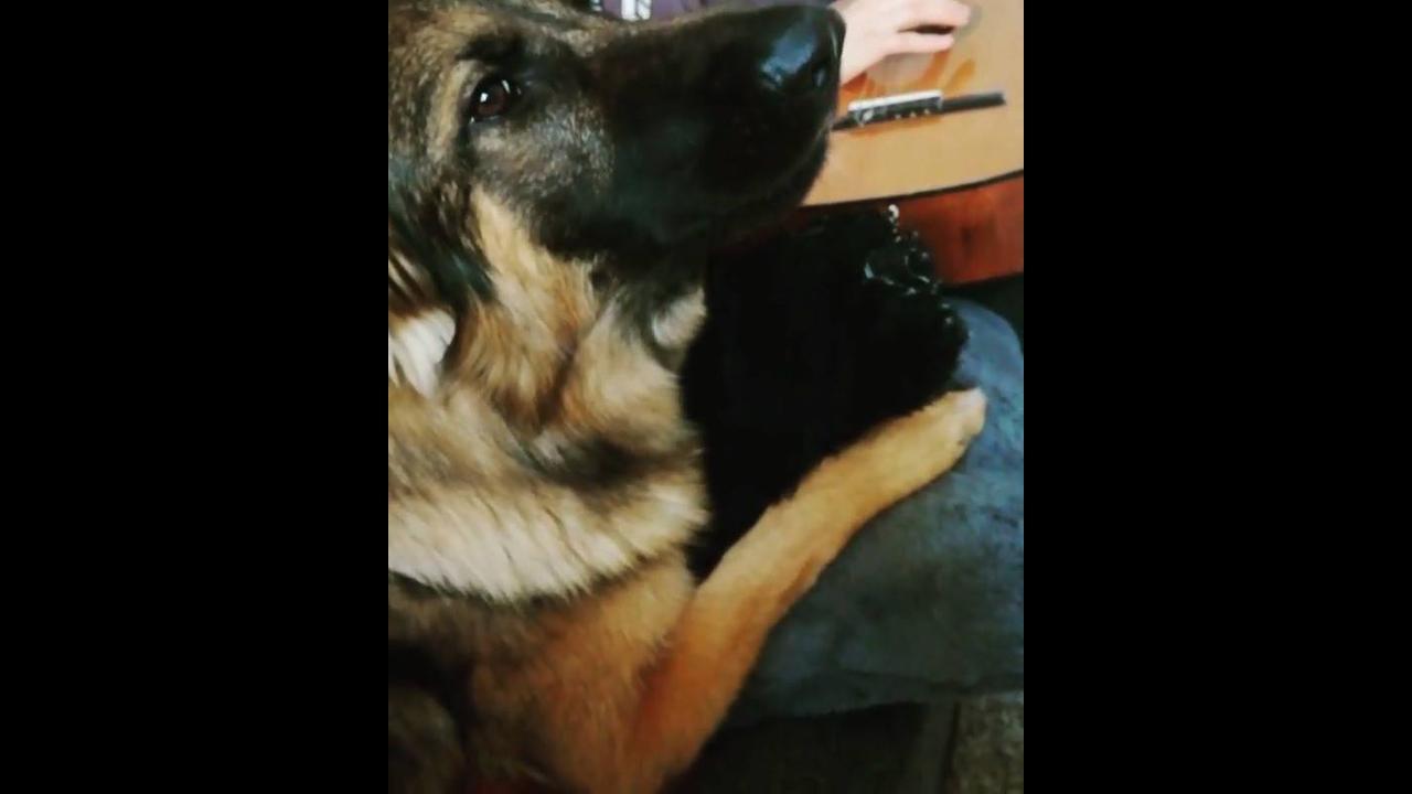 Cachorro cantando com seu dono, olha só que coisa mais linda!!!