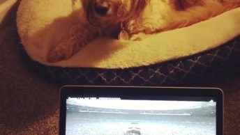 Cachorro Cantando Música, Você Vai Ver Que Talento Incrível Que Ele Tem!
