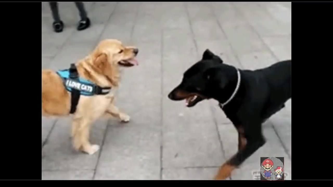 Cachorro capoeirista, por essa você não esperava hahaha