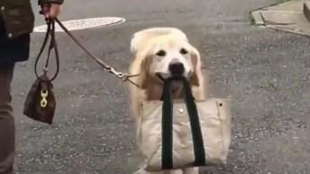 Cachorro Carregando A Bolsa Que Acabou De Comprar, Olha A Cara Da Felicidade!