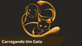 Cachorro Carregando Um Gato Pelas Orelhas - 'Aqui Esta O Arteiro Mamãe! '