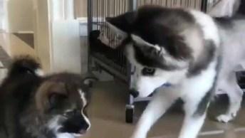Cachorro Chega Colocando Ordem Na Sua Vasilha De Comida Hahaha!