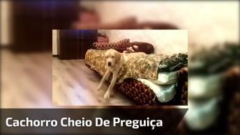 Cachorro Cheio De Preguiça De Sair Da Cama, Olha Só A Cara Dele, Hahaha!