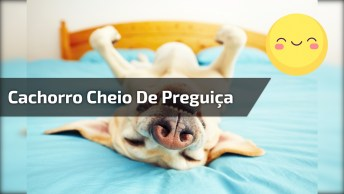Cachorro Cheio De Preguiça, Marque Alguém Que É Assim, Hahaha!
