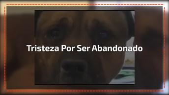Cachorro Chorando Após Ser Deixado Em Abrigo, Muito Triste!