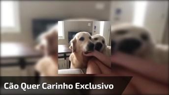 Cachorro Ciumento Não Deixa Dona Fazer Carinho Em Seu Irmão, Olha Só A Carinha!