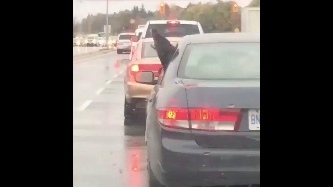 Cachorro com a cabeça para o lado de fora do carro e comendo a chuva
